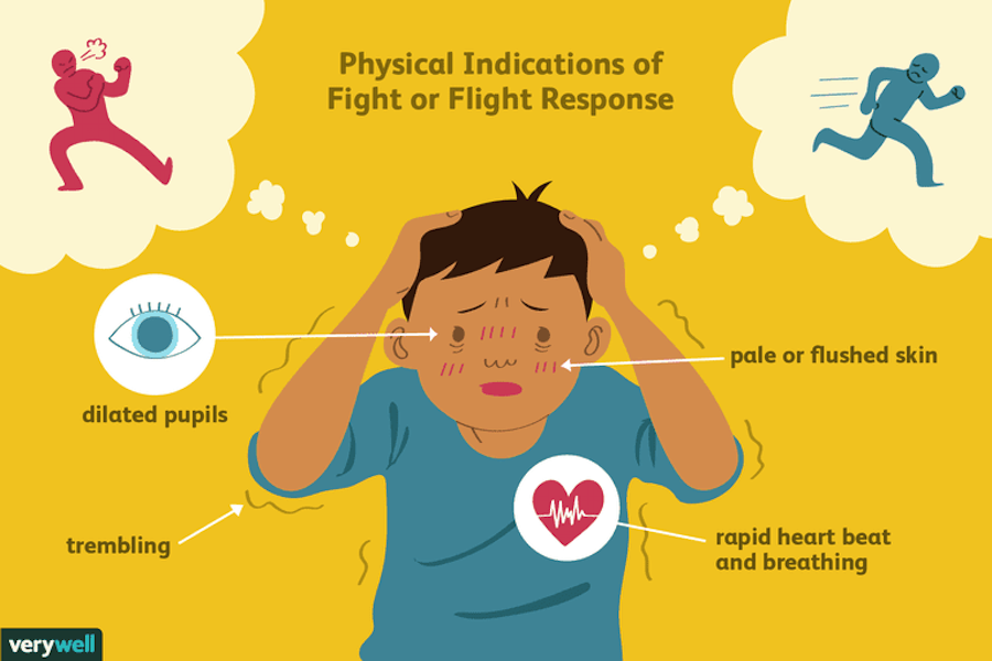 Fight Or Flight Stress Response Illustrated