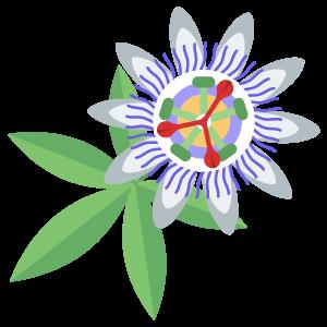 Passionflower ამონაწერი