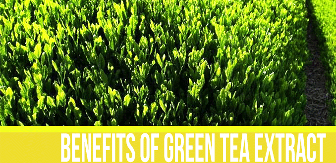 Health Benefits of Grean Tea Extract