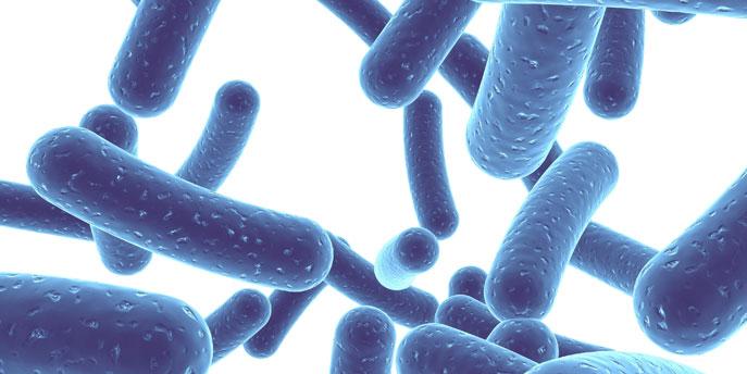 what-are-probiotics