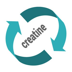 what-is-creatine-cycling