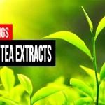 Top 10 Green Tea Extracts & Supplements – Best of 2016