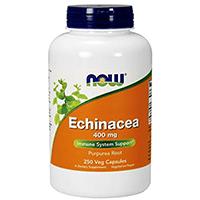 Теперь еда Echinacea