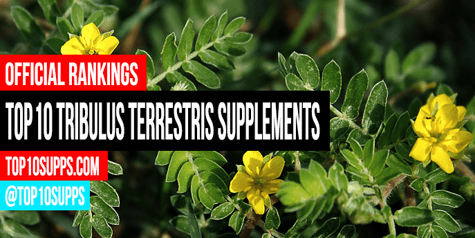 best-Tribulus Terrestris--integratori-you-can-acquistare-questo anno