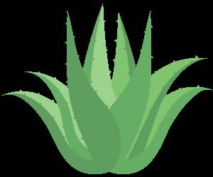 Ekstrak Aloe Vera